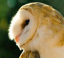 Over My Shoulder by Stephanie B