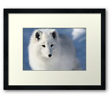 Lost in the Snow Framed Print