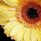 084-beauty gerber by elvira1