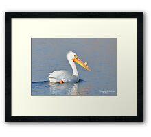 American White Pelican (Pelecanus erythrorhynchos) Framed Print