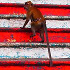 Monkey at Batu Caves in Malaysia by Fike2308