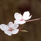 Blossom by bratpyle