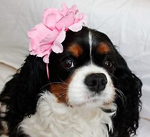 Charlie Girl in her Fascinator by AnnDixon