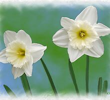 Daffodil Twins by Kenneth Hoffman
