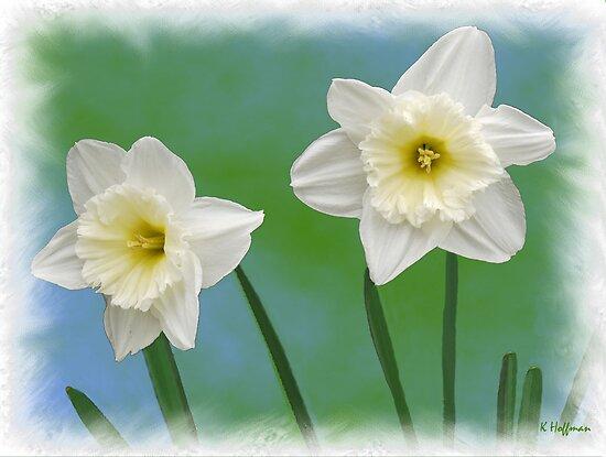 Daffodil Twins by Kenneth Hoffman