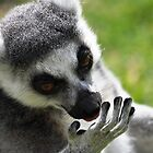 Palm reading Lemur by Ralph Goldsmith