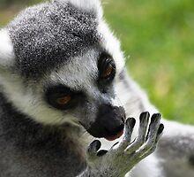 Palm reading Lemur by Ralph Goldsmith