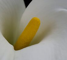 Insides of a Flower by imagetj