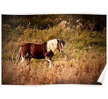 A horse in the field Poster