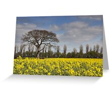 Yellow Rapeseed Fields Greeting Card