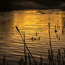 On Golden Pond by George Davidson