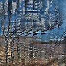 Old Birch near the West Highland Way by cuilcreations