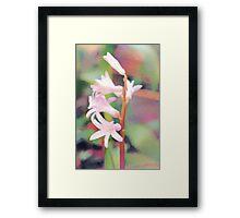 Backyard Flower Framed Print