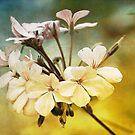 Fleur by zzsuzsa
