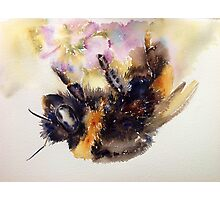 The return of Mr Bumble Photographic Print