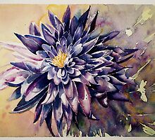 Chrysanthemum by Karl Fletcher