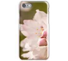 iPhone Case Cherry Blossoms iPhone Case/Skin