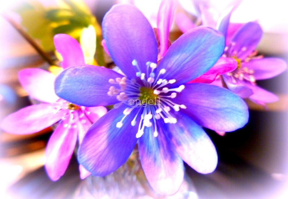 Hepatica by ©The Creative  Minds