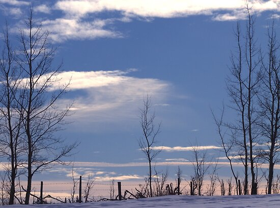 Winter Fenceline by Kathi Arnell