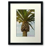 La Jolla Framed Print