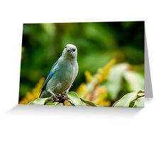 Blue-grey Tanager Greeting Card
