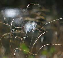 Grass with light and water by Mark Haynes Photography