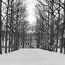 The Hague - Lange Voorhout by rsangsterkelly
