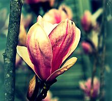 The Beauty Of Nature by Evita