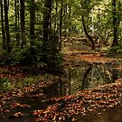Autumn Harmony by jules572