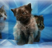 Little Kitten by DebbieCHayes