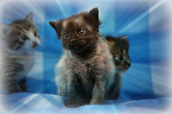 Little Kitten by DebbieCHayes