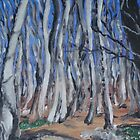 Winterforest in Southern Baden by billimaus