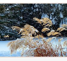 Winter Magic by Hana Bílková