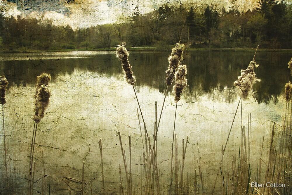 Where Time Stands Still by Ellen Cotton