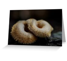 Furry doughnuts Greeting Card