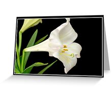 Easter Lilly in Color Greeting Card