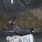 Sea Lion Alone by dsimon