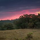 Sunset Over The Fields by Mandy  Harvey
