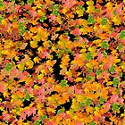 Fall Leaves Pattern by 319media
