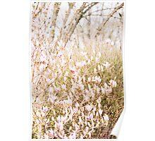 ...spring light through budding magnolia....... Poster