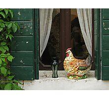 Venetian fowl Photographic Print