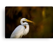 Egret with Twig Canvas Print