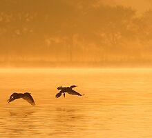 Cormorants Taking Flight by Paul Wolf