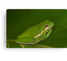 Green Tree Frog Close-up Canvas Print