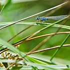 Damselfly I by Adam Le Good
