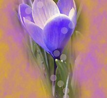 Crocus Dream by Kenneth Hoffman