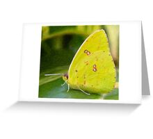 Cloudless Giant Sulphur Butterfly-Impasto Style Digital Painting Greeting Card