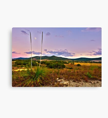 Moon and Yucca HDR Canvas Print