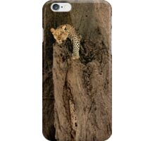 Lion Resting In Tree iPhone Case/Skin