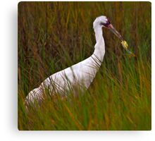 Crane and Crab Canvas Print